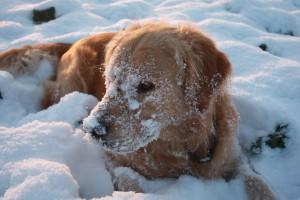 winter-995356_1280